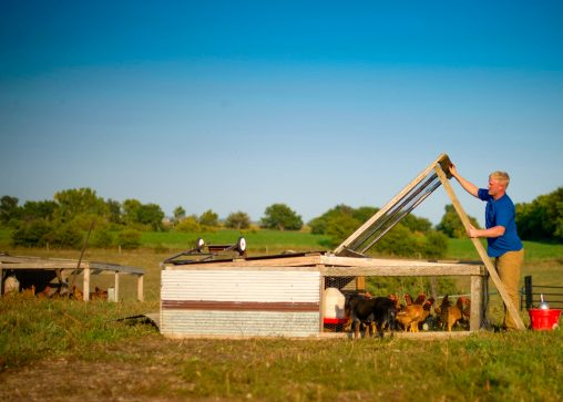 Jason Grimm feeds his chickens on his farm, Grimm Family Farm, near North English, Iowa. (USDA photo by Preston Keres)