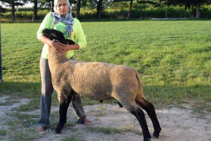 soukaina fram with a sheep