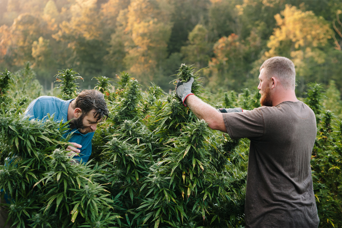 Mike Lewis and Shelby Floyd in a hemp field in Kentucky. (Photo credit: Anna Carson Dewitt Photography)