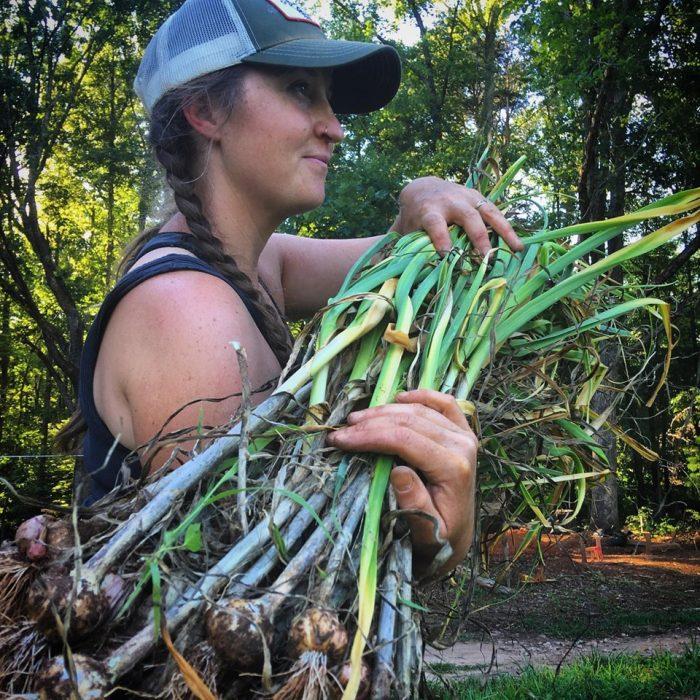 Hillary Kimmel harvesting garlic. (Photo courtesy of Hillary Kimmel / Pine Trough Branch Farm.)