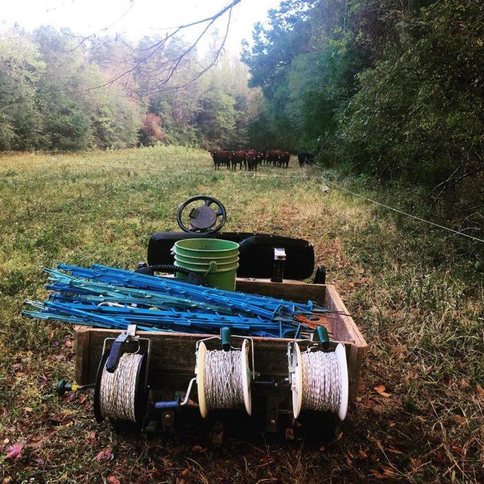 Moving paddocks on Pine Trough Branch farm. (Photo courtesy of Hillary Kimmel / Pine Trough Branch Farm.)