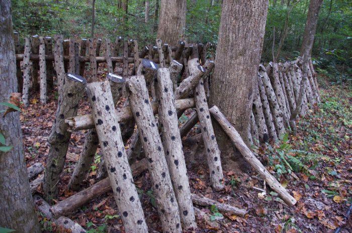 Pine Trough Branc Farm's mushroom logs