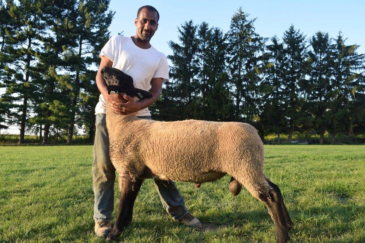 fram with a sheep on his halal farm and slaughtering operation