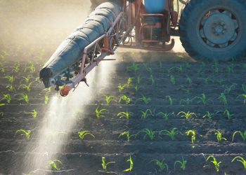 spraying atrazine on corn