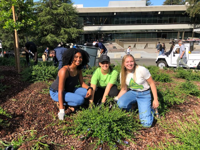 Herbicide-Free UC volunteers working to manage the landscape on campus without glyphosate
