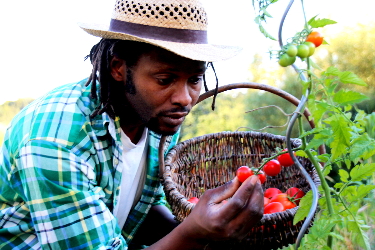 young farmer of color inspecting the tomatoes he's growing