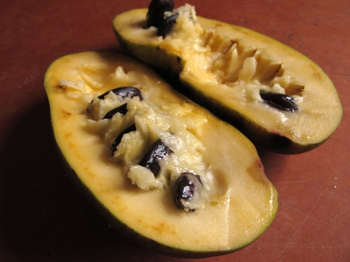 The inside of a pawpaw fruit.