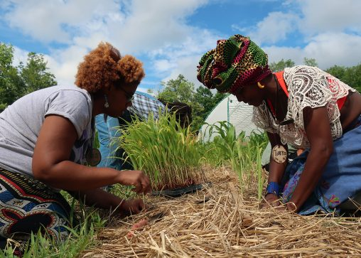 At Soul Fire Farm, a BIPOC-centered community farm, farmers learn regenerative methods such as heavy mulching and intercropping. Photo from Soul Fire Farm