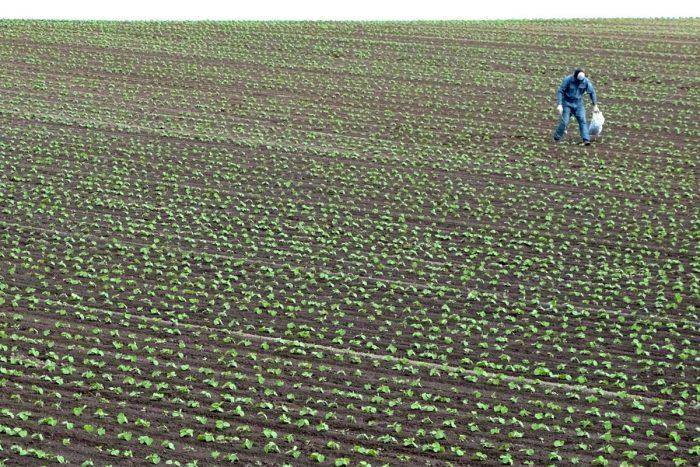 farmworker in a field