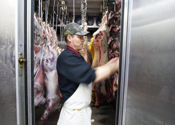 "Jim Wieringa hangs the last of the fresh meat and edible organs in the cold storage room of the truck. One of the Island Grown Farmers Cooperative members, Ruthie Dougherty, director of Coffelt Farm Stewards on Orcas Island, has been working with the mobile unit since 1994. ""Without the unit, there would be no island meat producers; without the unit, we're pretty much toast here,"" Dougherty said."