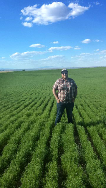 John Wicks in his lentil field