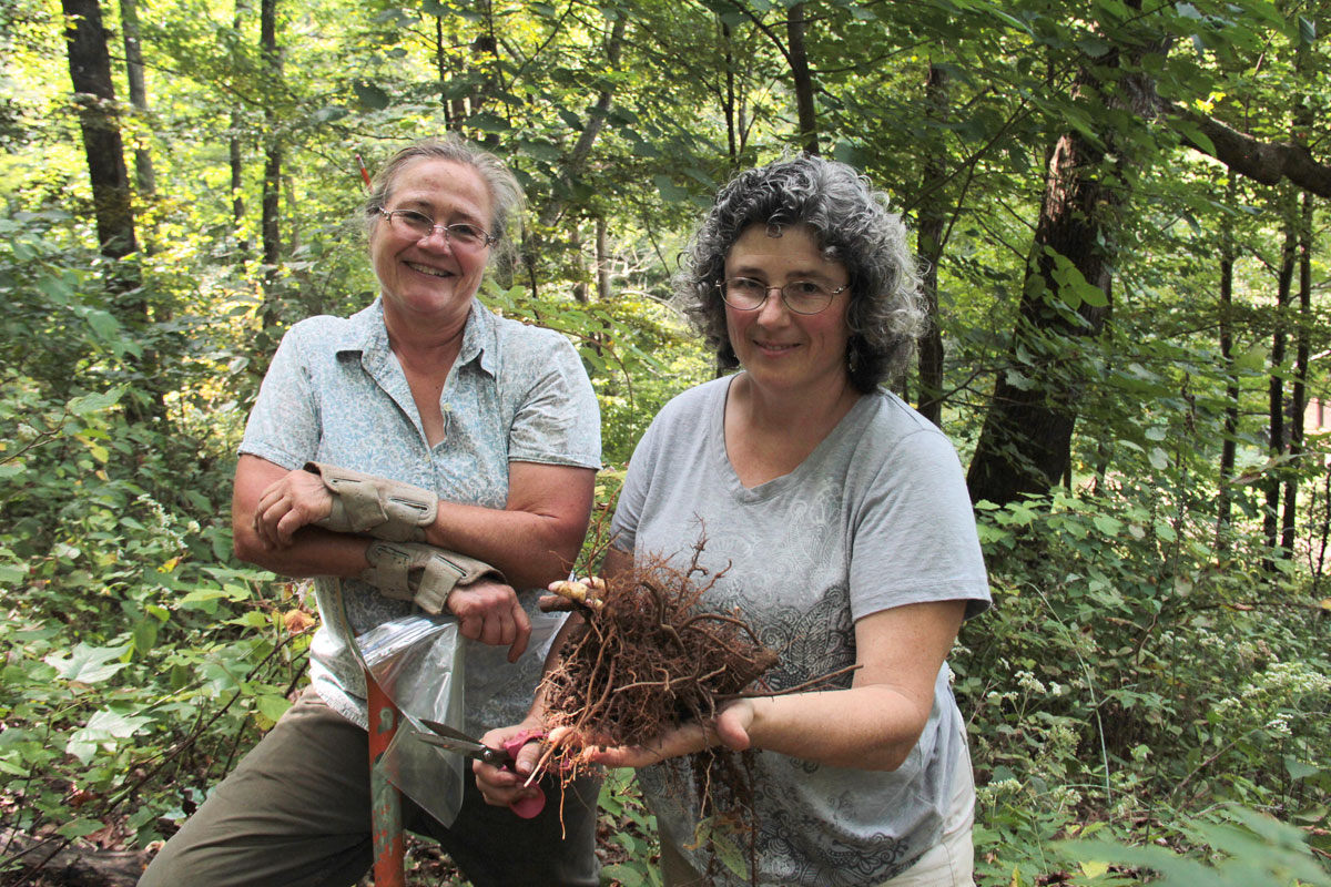 Landowners harvesting black cohosh. (Photo by Priya Jaishanker for Appalachian Forest Farmers.)
