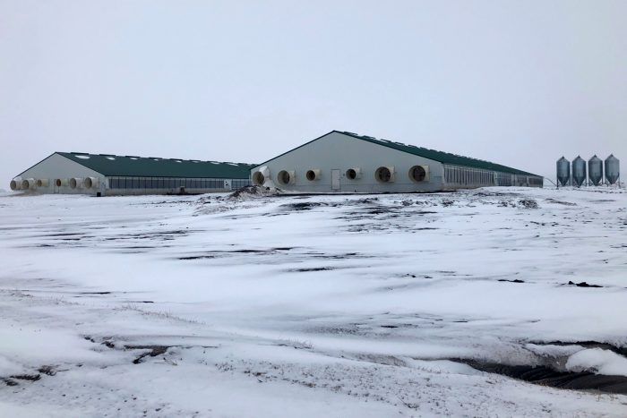 A new hog CAFO near Nevada, Iowa.