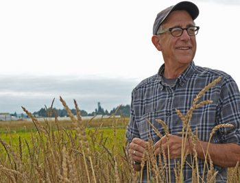 organic wheat researcher stephen jones