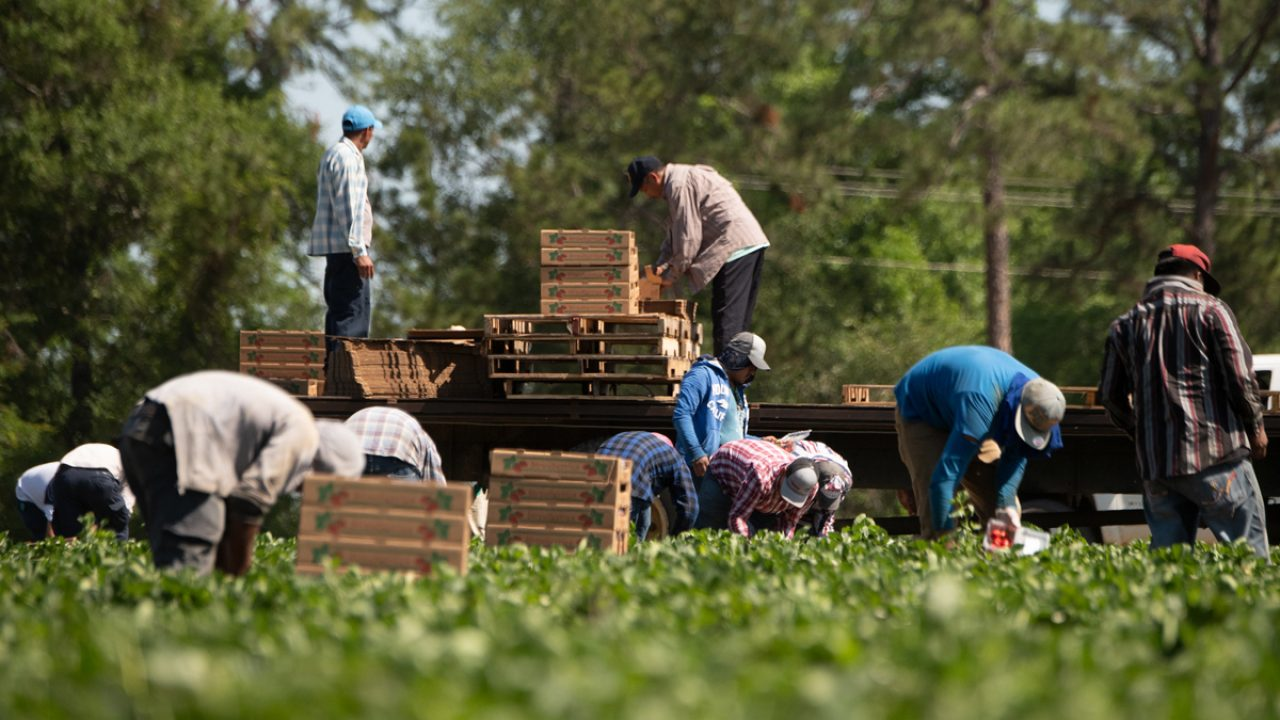 Farmworkers Are In The Coronavirus Crosshairs Civil Eats
