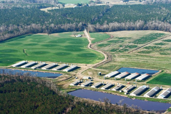 A hog cafo along in North Carolina.