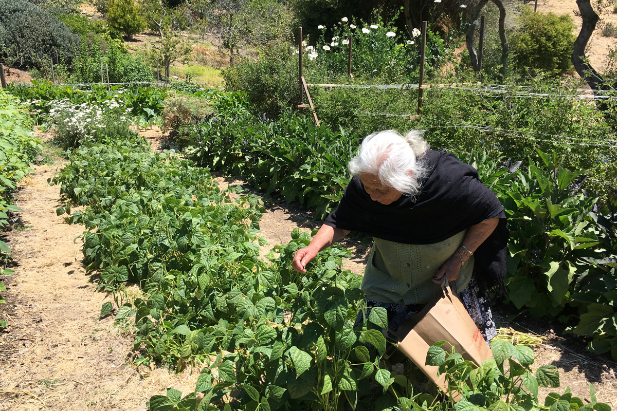 Maria harvesting at Alemany Farm. (Photo by Jason Mark)