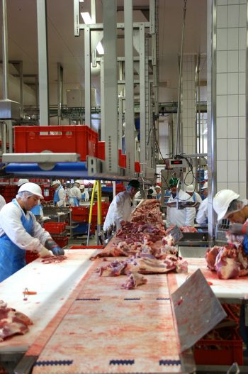 slaughterhouse meatpacking workers on the line. Photo CC-licensed by Jai79 on Pixabay.