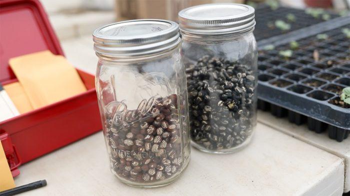 saved seeds in a jar
