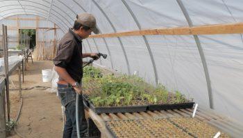 kristyn leach watering seed starts