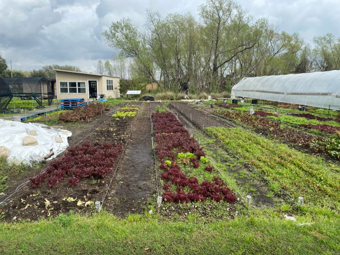 the farm fields at Veggi Co-op. Photo by Sarah Sax