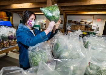Bagging lettuce from local small farms at the Vermont Food Bank