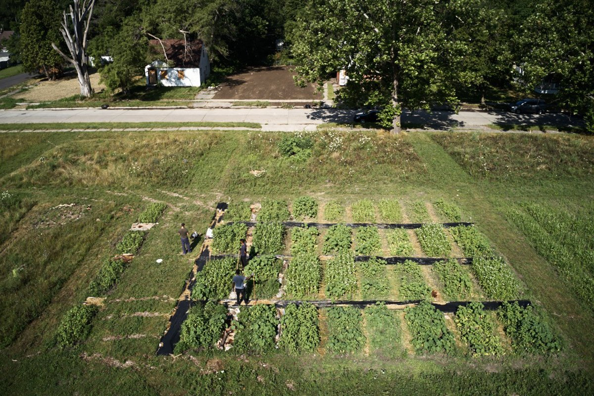 An overhead view of the Detroit urban farm study on week five. (Photo courtesy of Naim Edwards)