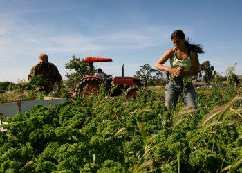 Marsha Habib working in a farm field