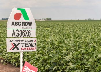 A sign posted in a field of Roundup Ready, dicamba-resistant soybeans.