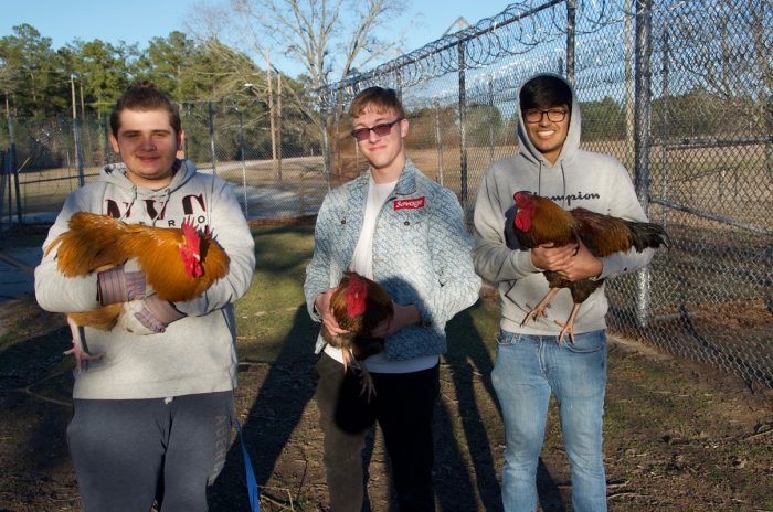 Michael Adyson Strickland, Logan Stern, and Robin Patel (left to right) transfer roosters to a different part of the prison yard at the end of a work day.