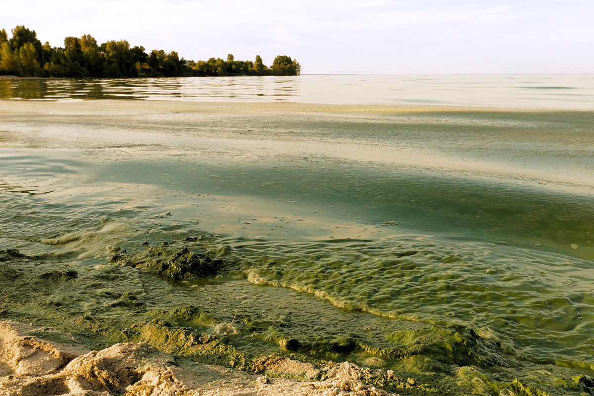 lake erie during a toxic algal bloom as a result of agricultural runoff