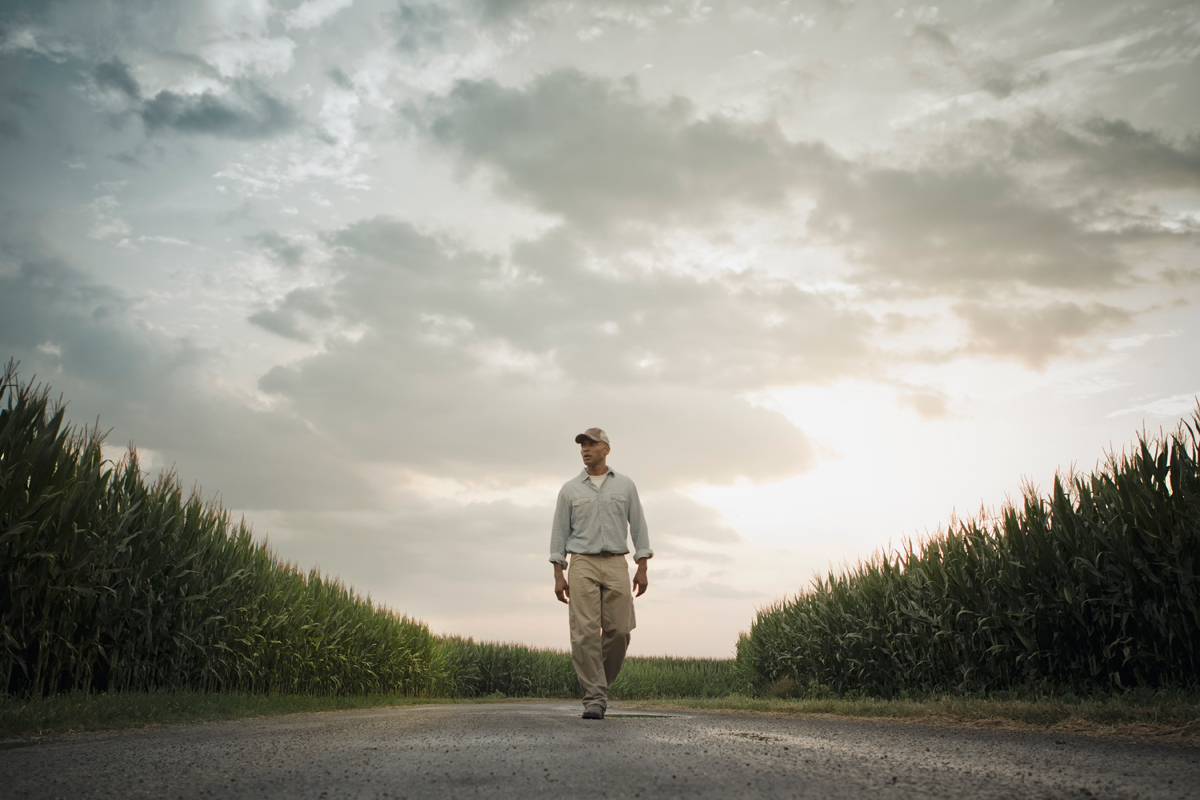 a farmer walks in a cornfield contemplating whether to spray glyphosate, dicamba, or one of three other herbicides in a new corn variety proposed by Bayer/Monsanto