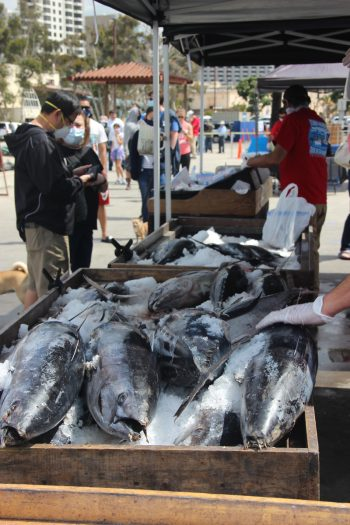 Vendors sell freshly caught fish at the Tuna Harbor Dockside Market, an open-air seafood market in downtown San Diego. (Photo by Mark Armao)