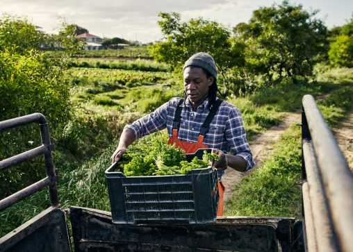 A Black farmer loading produce into a pickup truck