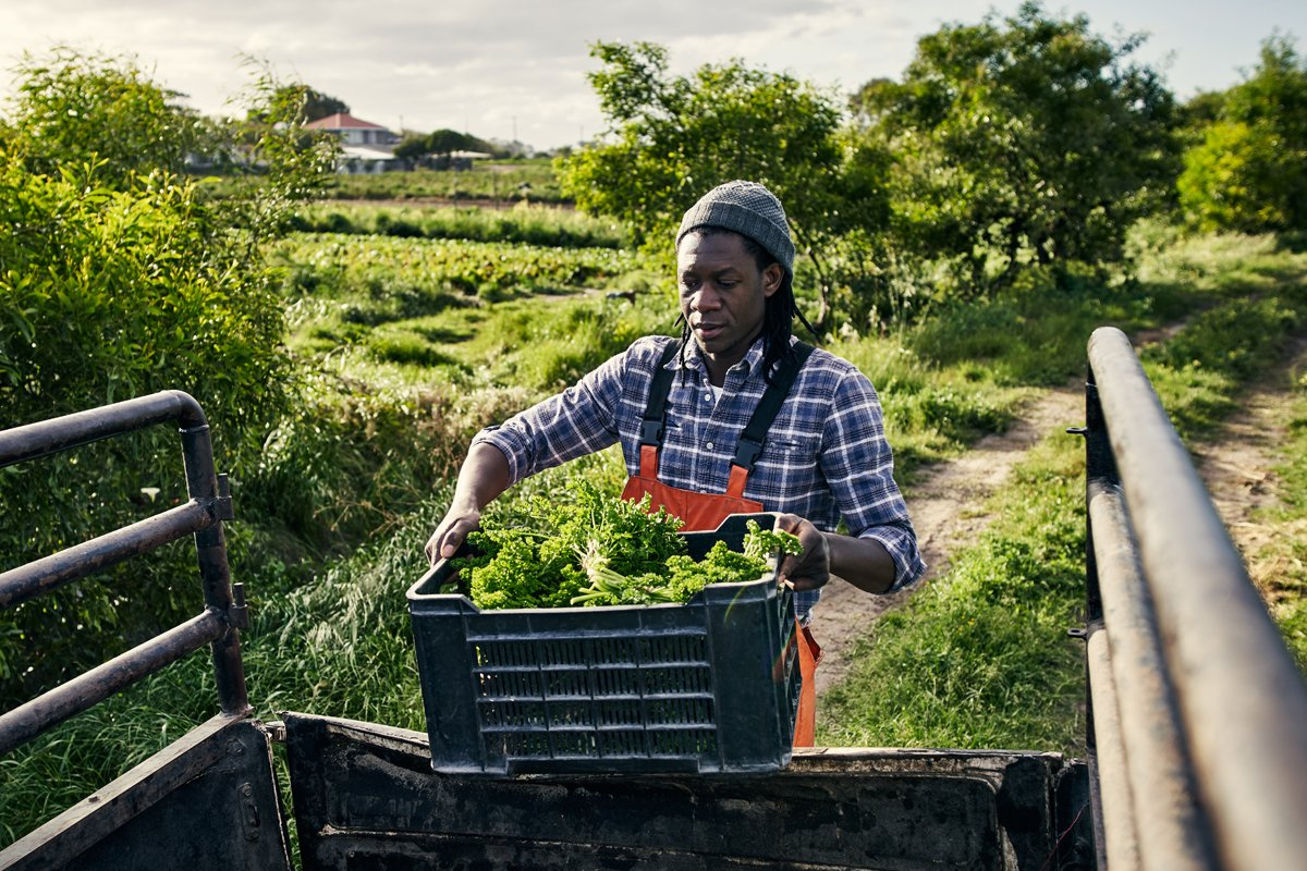 A Black farmer loading produce into a pickup truck