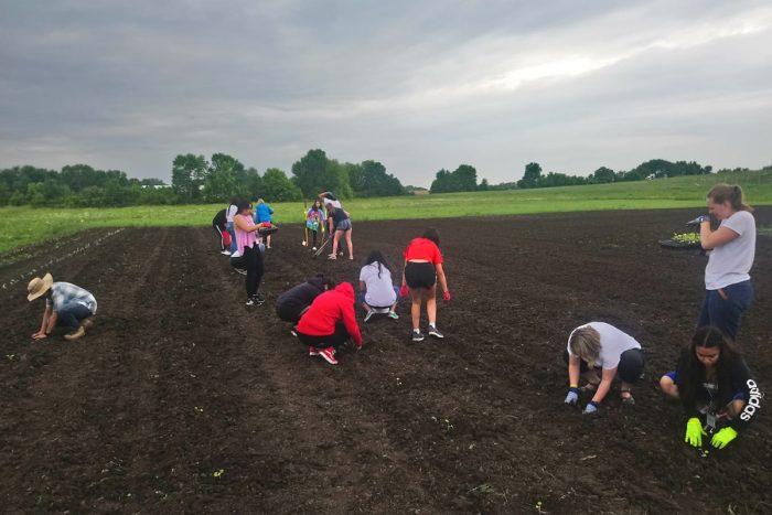 Planting seedlings in southeast Minnesota.
