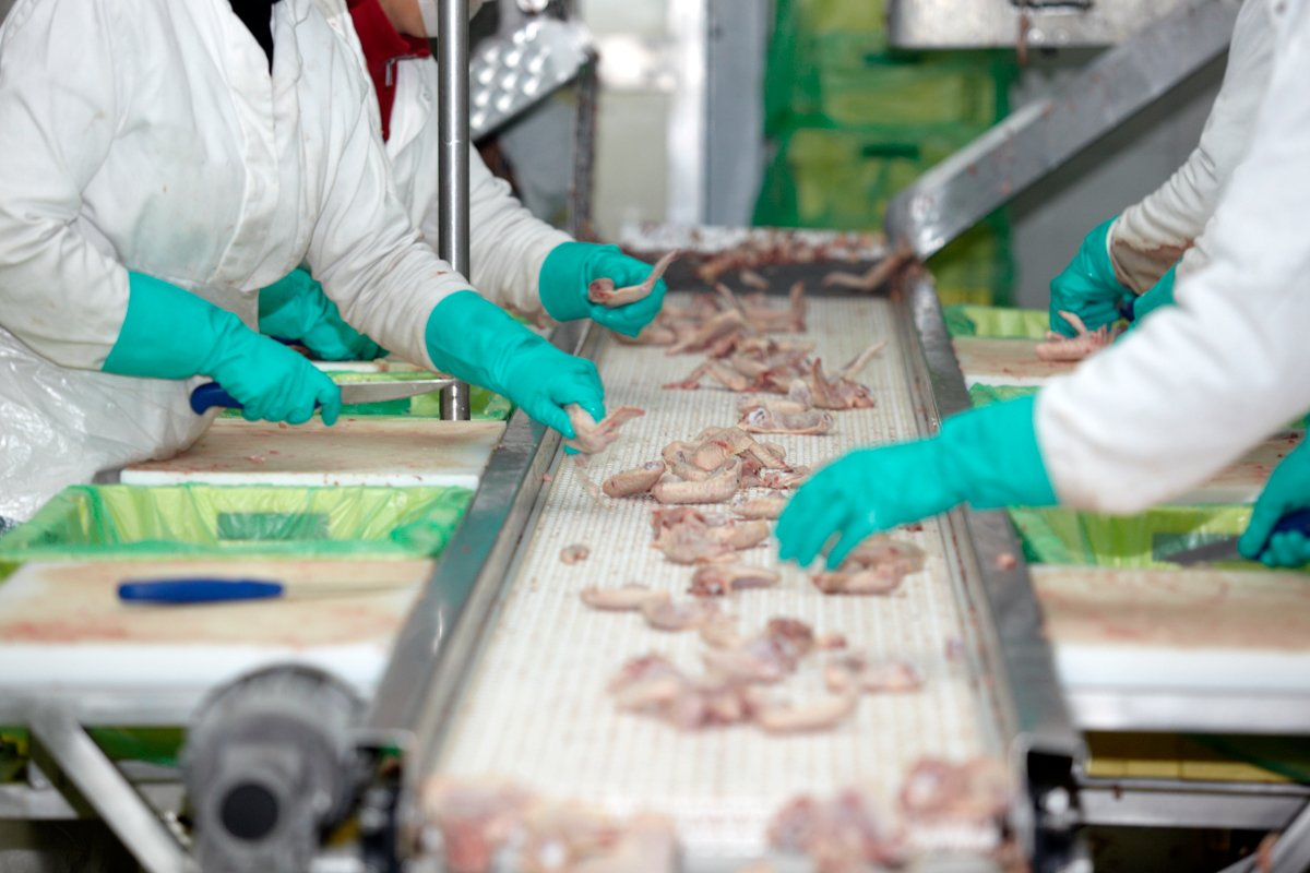 workers in a poultry processing plant dealing with fast poultry line speeds and insufficient social distancing and other protections.