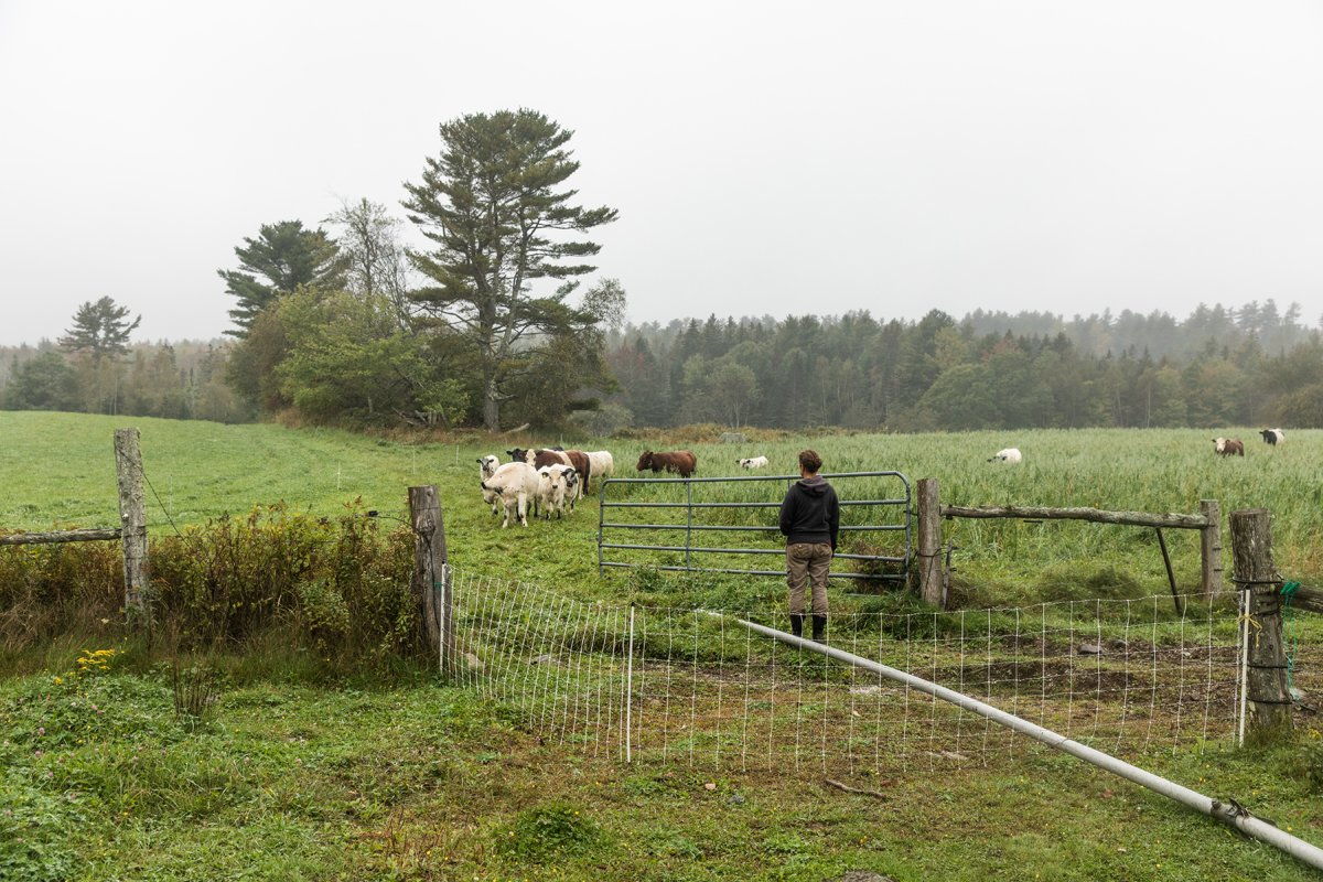 With Ever More Unpredictable Weather, Maine Farmers Reflect on Climate Change