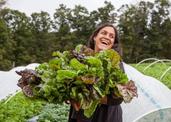 Jen Salinetti of Woven Roots Farm harvesting chard.