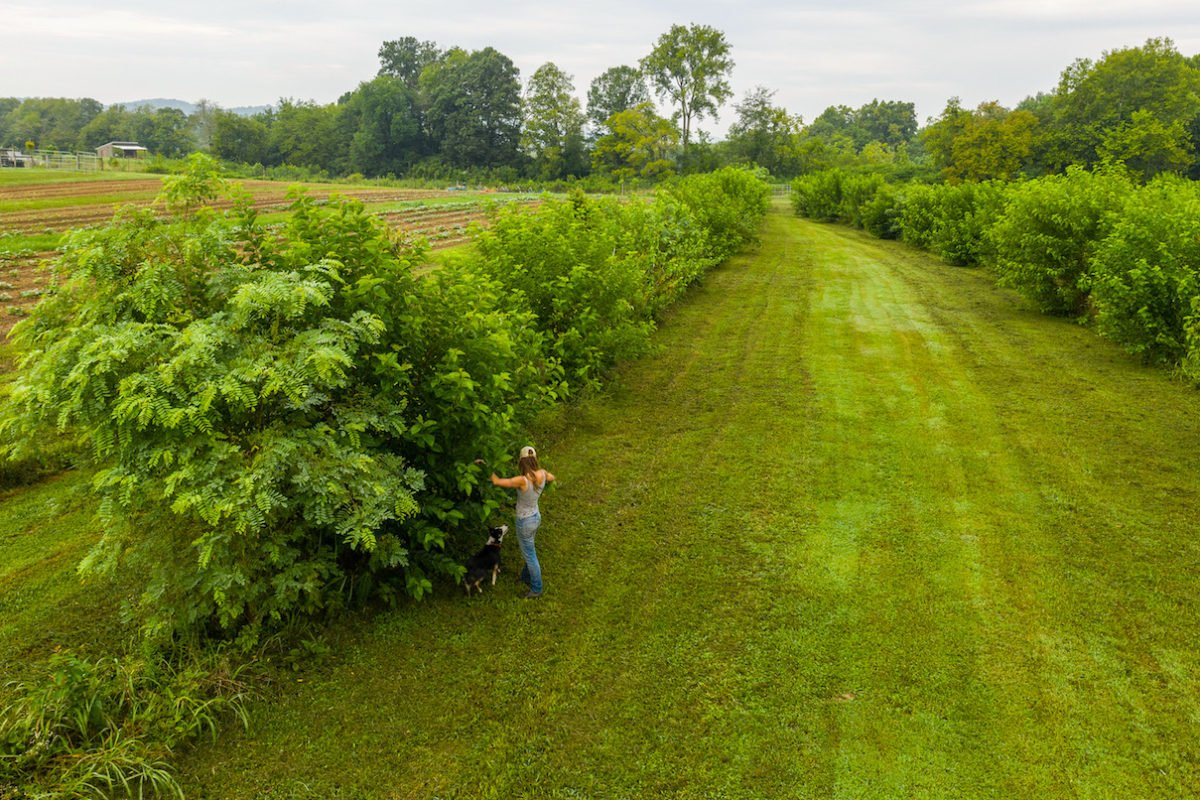 Caney Fork Farm agroforestry profitable