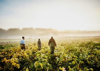 A group of young farmers or beginning farmers walking through their field in the early morning