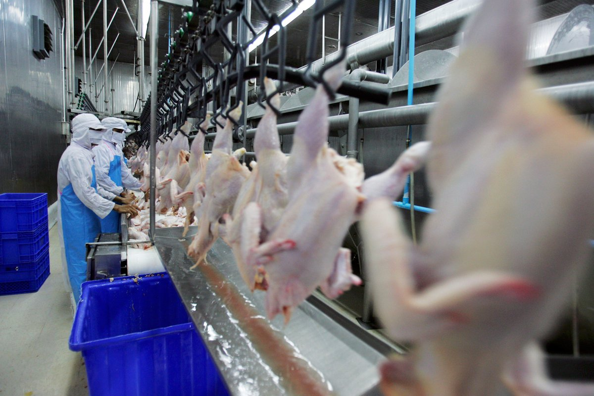 food workers at a poultry processing plant watch chickens go by as line speeds accelerate