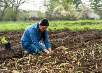 Tika Bhandari of Bhutan works in her farm. Photo credit: Bob Blanchard