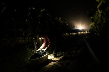 Due to the pandemic and smoke conditions, vineyard workers are being forced to make the decision of staying home and protecting families health or going out to work in highly dangerous and risky situations in order to financially support their families.
