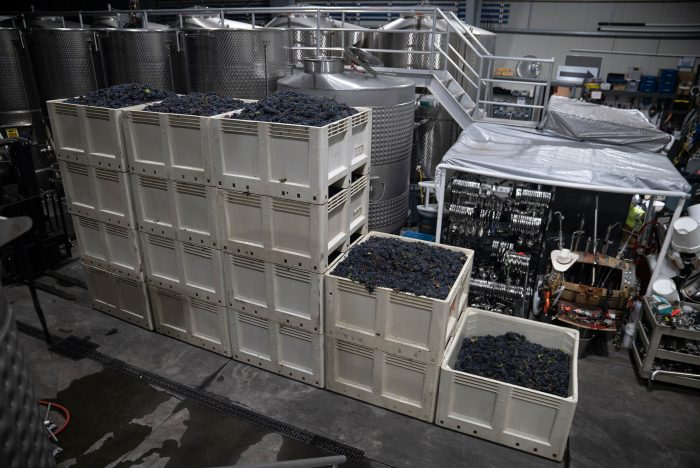 Over the course of four hours, the team of 14 vineyard workers harvested ten tons of grapes (20,000 pounds).