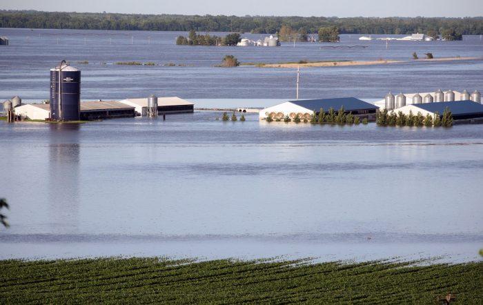 A hog farm is surrounded by flood water June 15, 2008 near Oakville, Iowa.