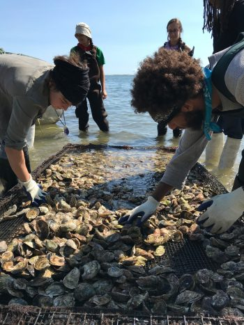Northeast Encounter 3. Members of Union Paysanne and National Farmers Union of Canada support shellfish restoration efforts of the Mashpee Wampanoag Tribe, Mashpee, Massachusetts 2018 photo credit: Organización Boricuá de Agricultura Ecológica de Puerto Rico. (Photo courtesy of WhyHunger)