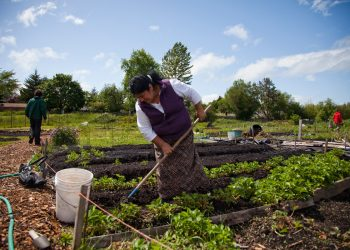 A woman tending her small agroecology plot of land. Photo courtesy of WhyHunger