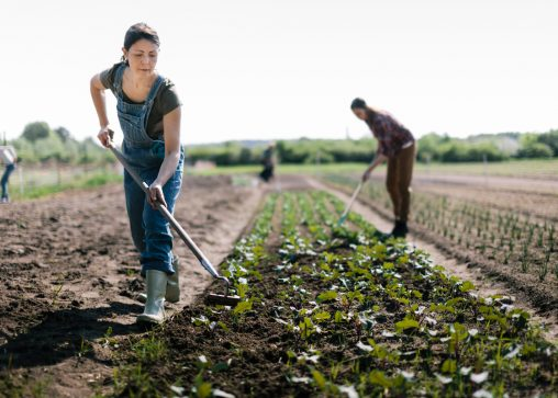 farmers working together cooperatively to harvest and tend to produce as part of their co-op