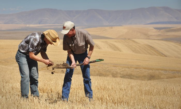 NRCS Soil Conservationist Garrett Duyck (left), and David Brewer examine a soil sample on the Emerson Dell farm near The Dalles, Oregon. Brewer focuses on improving soil health to increase water infiltration and retention on his farm. NRCS photo by Ron Nichols